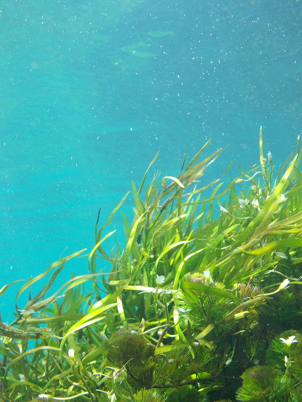kieselalgen diatomeae algen im aquarium. Black Bedroom Furniture Sets. Home Design Ideas